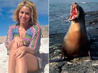Shakira Fok Saldırısı