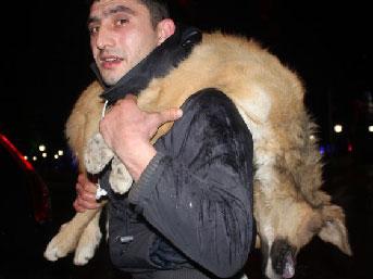 Başkanın kapısına köpek leşi bıraktı
